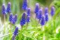 Blurred background blue wildflowers bokeh