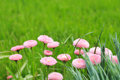 Blurred background, green with small pink flowers Royalty Free Stock Photo