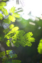 Blurred background with greenery foliage summer sunlight and bokeh Stock Images