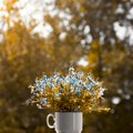 Blurred background vertical backlighting in a white cup bouquet of wildflowers blue golden forget-me-not instagram