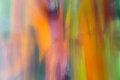 Blurred Colourful Background Rainbow Eucalyptus