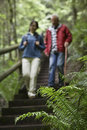 Blurred couple walking down forest stairs middle aged on with focus on fern in foreground Royalty Free Stock Image