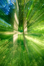 Blurred forest Royalty Free Stock Images