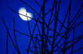 Blurred moon in the blue night Stock Photography
