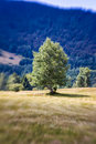 Blurred mountain tree lensbaby shot italy Stock Photos