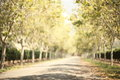 Blurred pathway with wonderful swirly bokeh Royalty Free Stock Photo