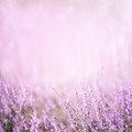 Blurred purple floral background Royalty Free Stock Photo
