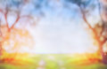 Blurred spring or autumn nature background with green sunny field and tree on blue sky outdoor Royalty Free Stock Photography
