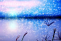 Blurred of Swallen Finger Grass at twilight with snow flakes falling. Royalty Free Stock Photo
