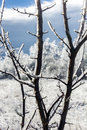 Blurred winter landscape seen thorugh iced-covered branches Royalty Free Stock Photo