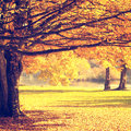 Blurry autumn scene vintage yellow park filter color effect used Stock Image