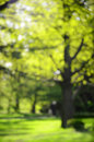 Blurry background spring park