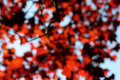 Blurry Copper Leaves Royalty Free Stock Photos