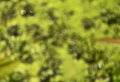 Blurry green weed background on water Royalty Free Stock Photo