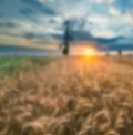 Blurry landscape useful as background Royalty Free Stock Photo