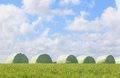 The blurry scene of white wrapped silage and sky background. Royalty Free Stock Photo