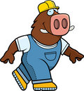 Boar Builder Stock Image