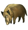Boar isolated realistic illustration white background Stock Image