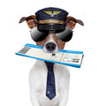 Boarding pass dog Royalty Free Stock Photo