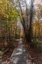 stock image of  Boardwalk in autumn Acadia
