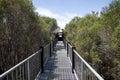 Boardwalk bridge to lake muir lookout in western australia panoramic Stock Photography