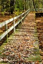 Boardwalk covered in leaves long fall with railing on one side Stock Image