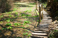 Boardwalk through dense vegetation in tropical forest in africa Stock Photo