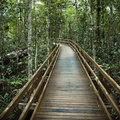 Boardwalk in forest. Royalty Free Stock Photo