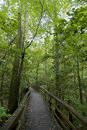 Boardwalk in forest Stock Image