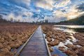 Boardwalk leading to forest alongside lake and sunset with into Royalty Free Stock Images