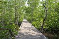 Boardwalk through the mangrove forest Stock Photo