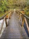 Boardwalk In Nature