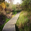 Boardwalk in new zealand landscape Stock Images