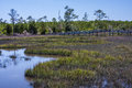 Boardwalk over tidewater cedar point trail near swansboro nc sunny view of swamp water grasses and Stock Photo
