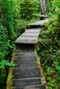 Boardwalk in rain forest Stock Image
