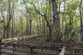 Boardwalk At Slough Preserve Stock Photography