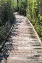 Boardwalk in the Swamp Royalty Free Stock Photo