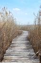 Boardwalk in swampland with reeds wetland dragoman swamp natural reserve and birds habitat bulgaria Stock Images