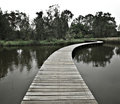 Boardwalk to forest Stock Photography