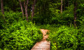 Boardwalk trail and lush spring forest in Codorus State Park Royalty Free Stock Photo