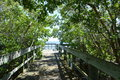 Boardwalk Under The Trees Royalty Free Stock Photo
