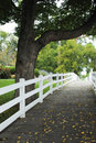 Boardwalk with White Picket Fence Stock Image