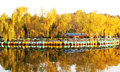 Boat and autumn trees a lot of the docked pier by the lake golden tree shipside in the photo was taken in november Royalty Free Stock Images
