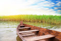 Boat on the bank of lake in a high cane Stock Photography