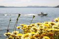 Boat with flowers in the foreground Royalty Free Stock Image