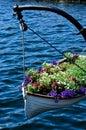 Boat Full Of  Flowers