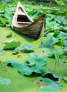 Boat resting on a pond full of lotus Royalty Free Stock Photo