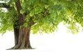 Image : Bodhi Tree day wallpaperfairytaledreamtreebeautiful autumn