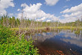 Bog Lake in the Wilderness Royalty Free Stock Images