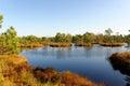 Bog pools in saara estonia Royalty Free Stock Images